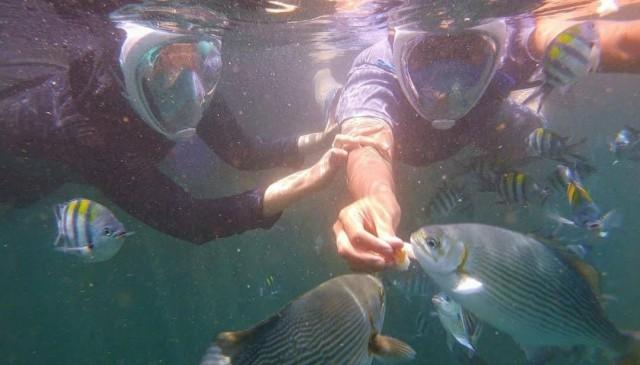 Bangsring Underwater Snorkeling