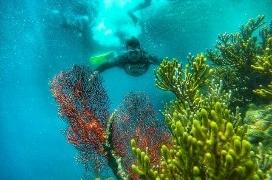 Snorkeling Pulau Menjangan