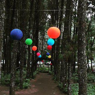 Hutan Pinus Wisata Songgon Banyuwangi