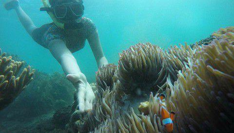 Bangsring Underwater - Wisata Snorkeling Banyuwangi