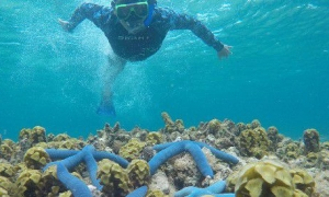 Pulau Tabuhan - Wisata Snorkeling Banyuwangi