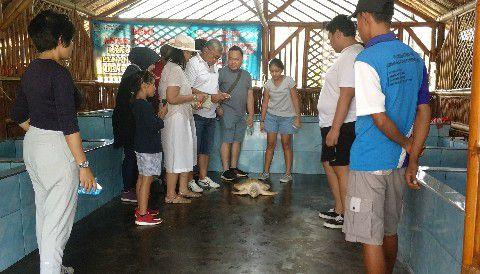 Edukasi Penyu Pantai Cemara Banyuwangi