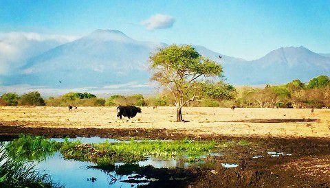 Baluran - Tempat Hunting di Banyuwangi