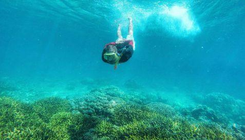Snorkeling - Wisata Teluk Biru Banyuwangi