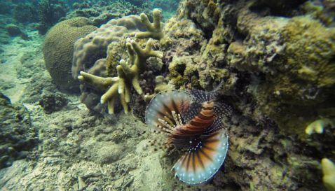 Underwater - Wisata Teluk Biru Banyuwangi