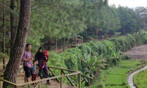 Travel Wisata Banyuwangi - Hutan Pinus Songgon